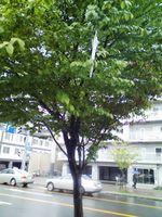 Umbrella_tree