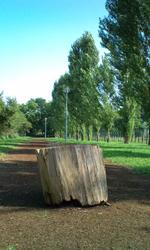 Stump_2