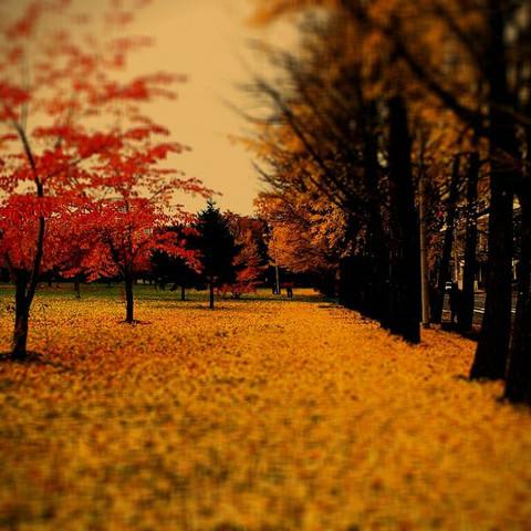 Nakajima_park03