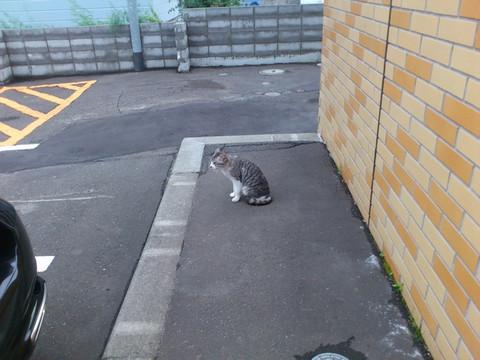 Hibari_cat01