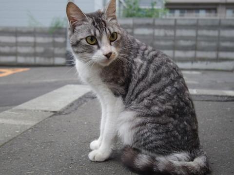 Hibari_cat02