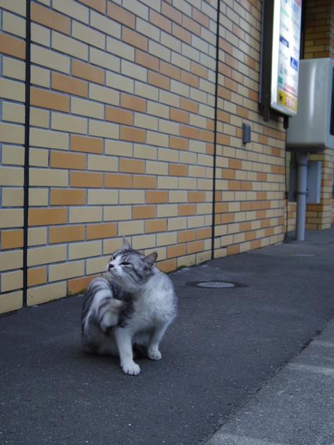 Hibari_cat04