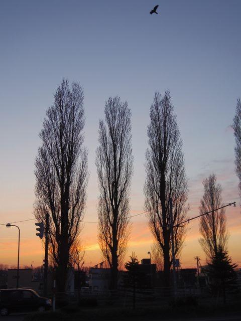 Beautiful_sunset