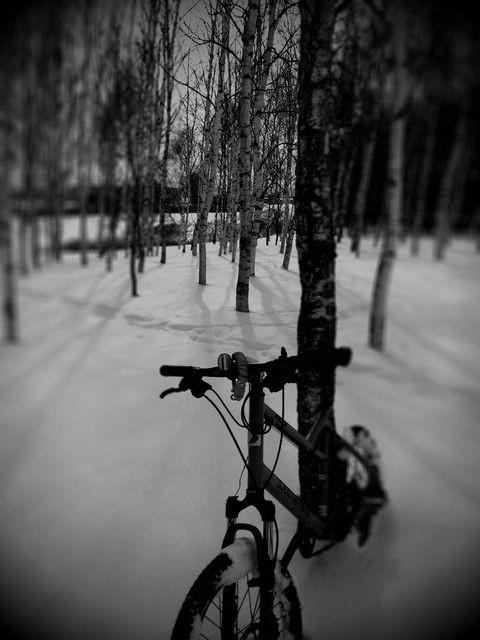 Birch_forest