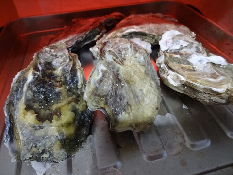 Oysters_of_saroma03