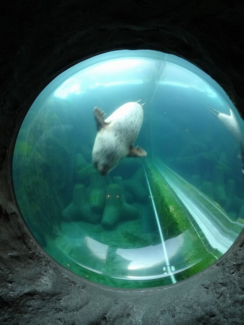 Asahiyama_zoo01