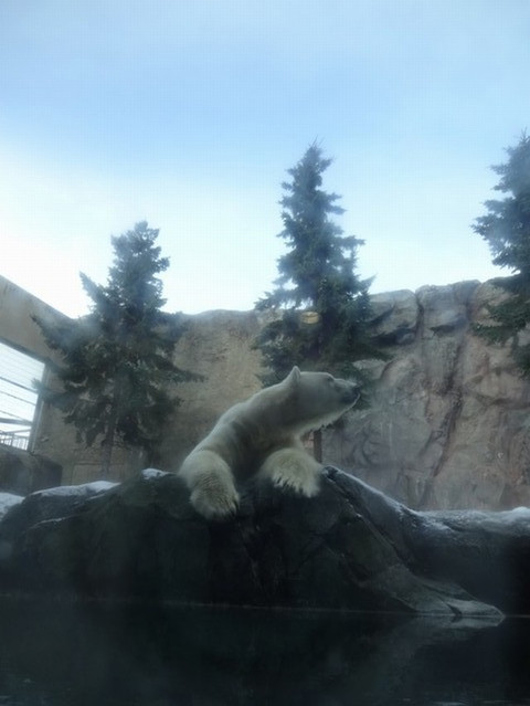 Asahiyama_zoo02