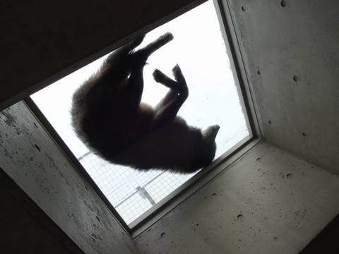 Asahiyama_zoo04