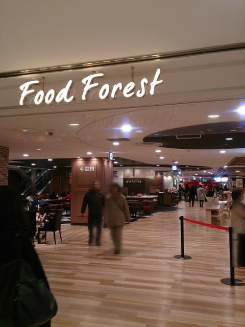 Foog_forest