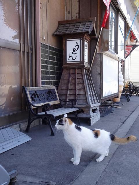 Inoue_cat