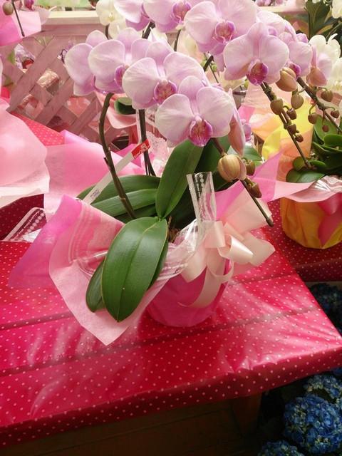 Flower_arrangement
