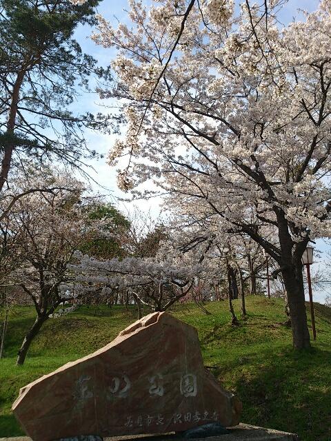 桜@東明公園