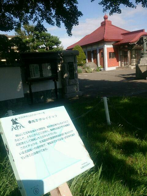 龍雲寺のイチョウ