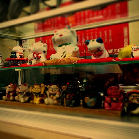 Shingetsu_cat