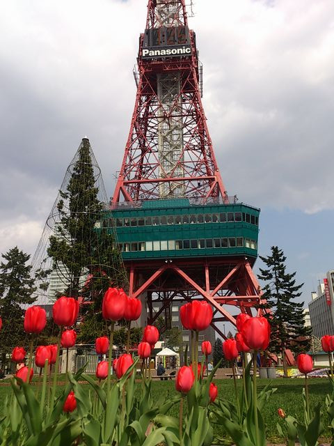 Tulips_and_tv_tower