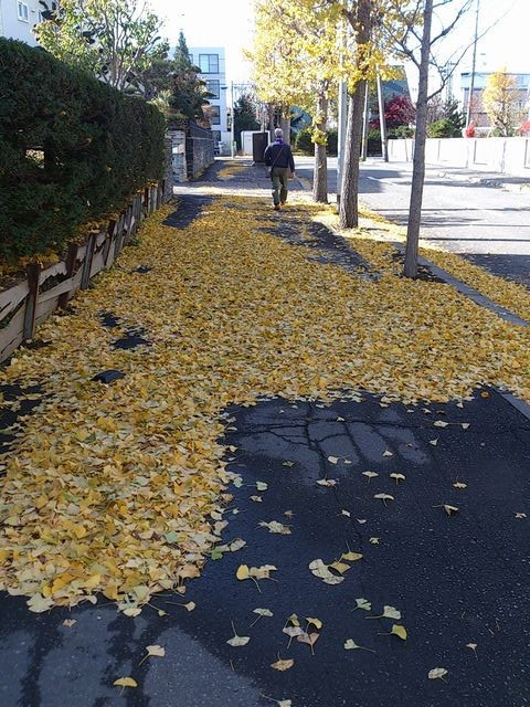 Leaves_of_yellow