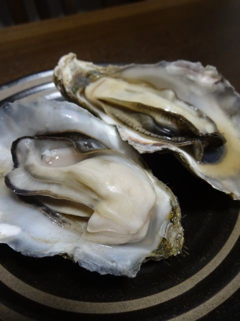 Oysters_of_saroma02